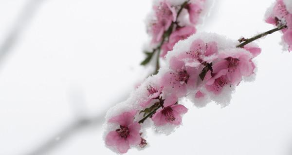 spring summer fall winter